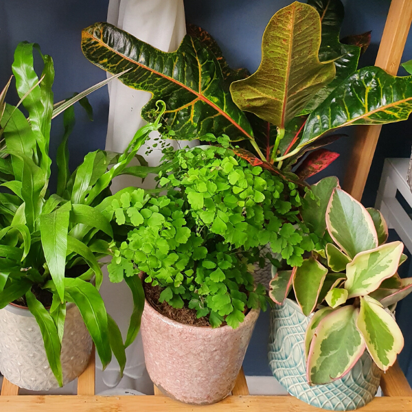 House Plants in Pots